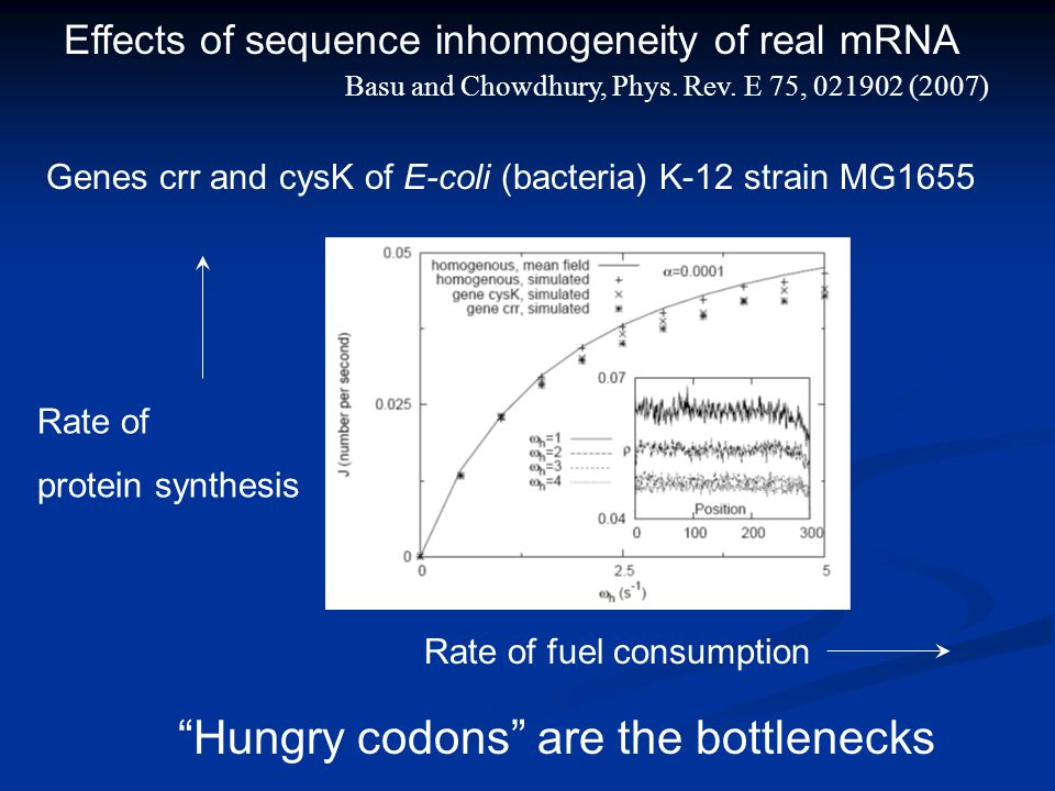 "Effects of sequence inhomogeneity of real mRNA Genes crr and cysK of E-coli (bacteria) K-12 strain MG1655 ""Hungry codons"" are the bottlenecks Basu and"