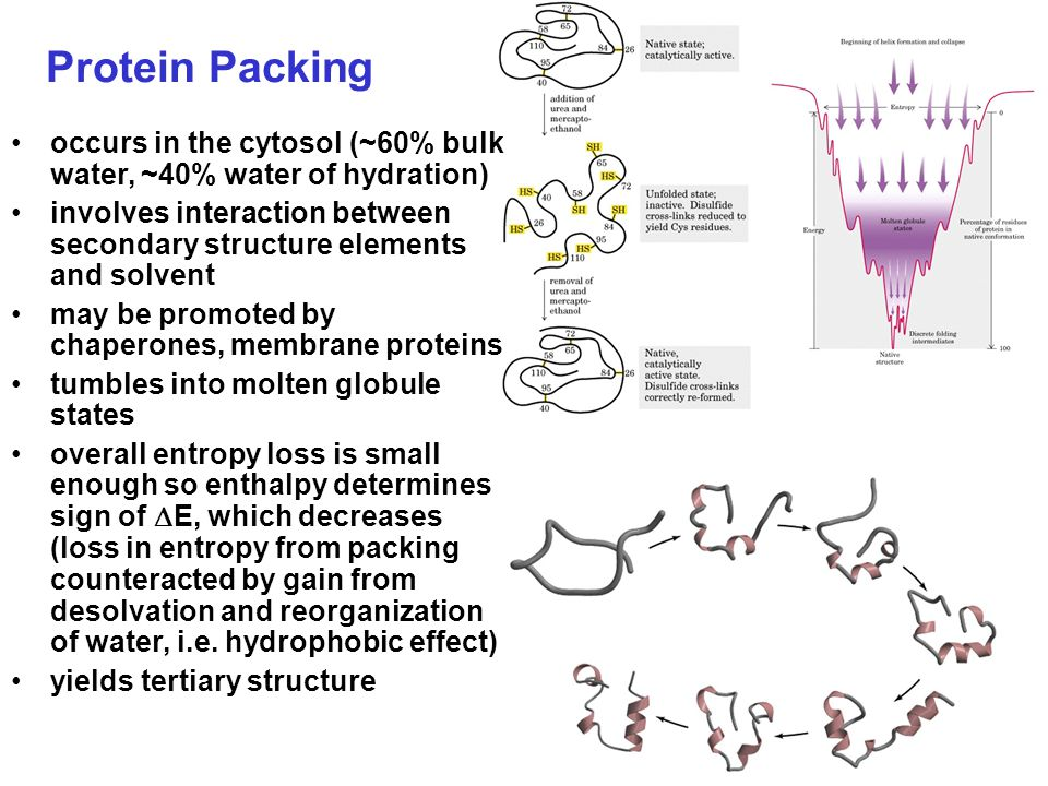 Protein Packing occurs in the cytosol (~60% bulk water, ~40% water of hydration) involves interaction between secondary structure elements and solvent