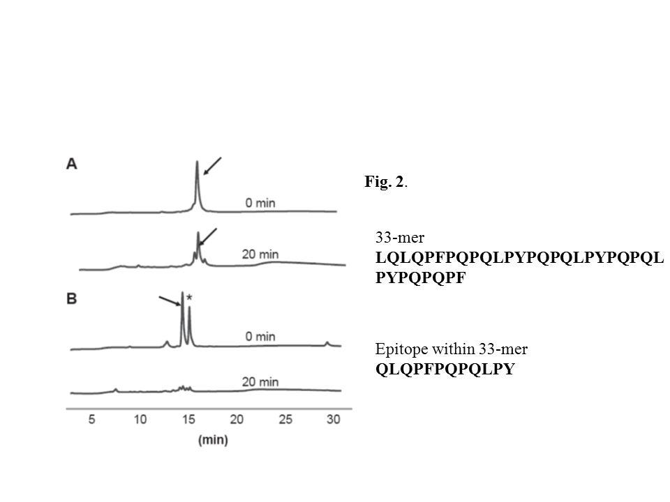 Fig. 2. 33-mer LQLQPFPQPQLPYPQPQLPYPQPQL PYPQPQPF Epitope within 33-mer QLQPFPQPQLPY