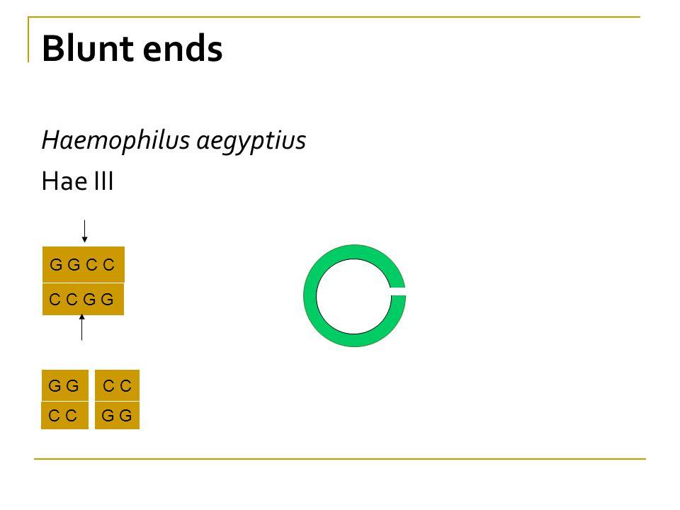 Blunt ends Haemophilus aegyptius Hae III G G C C C C G G G G C C C C G G