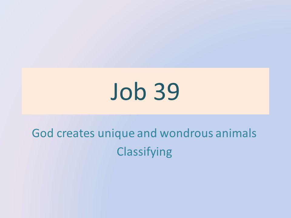 Job 39 God creates unique and wondrous animals Classifying