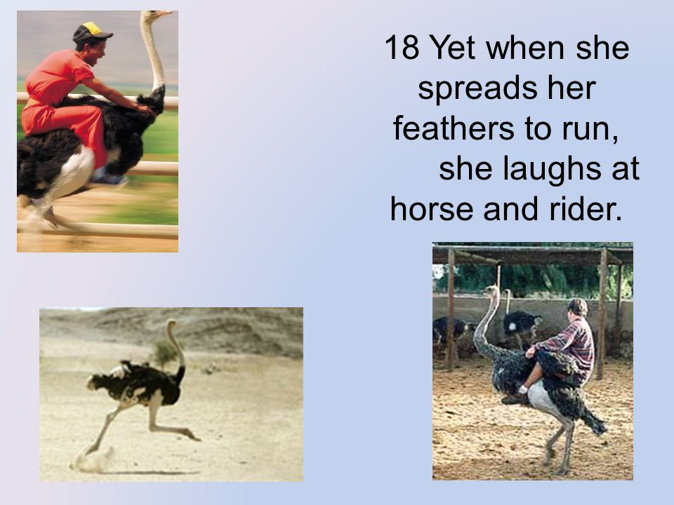 18 Yet when she spreads her feathers to run, she laughs at horse and rider.