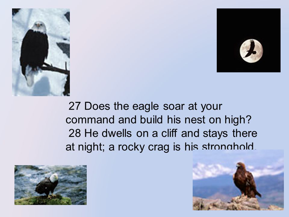 27 Does the eagle soar at your command and build his nest on high.