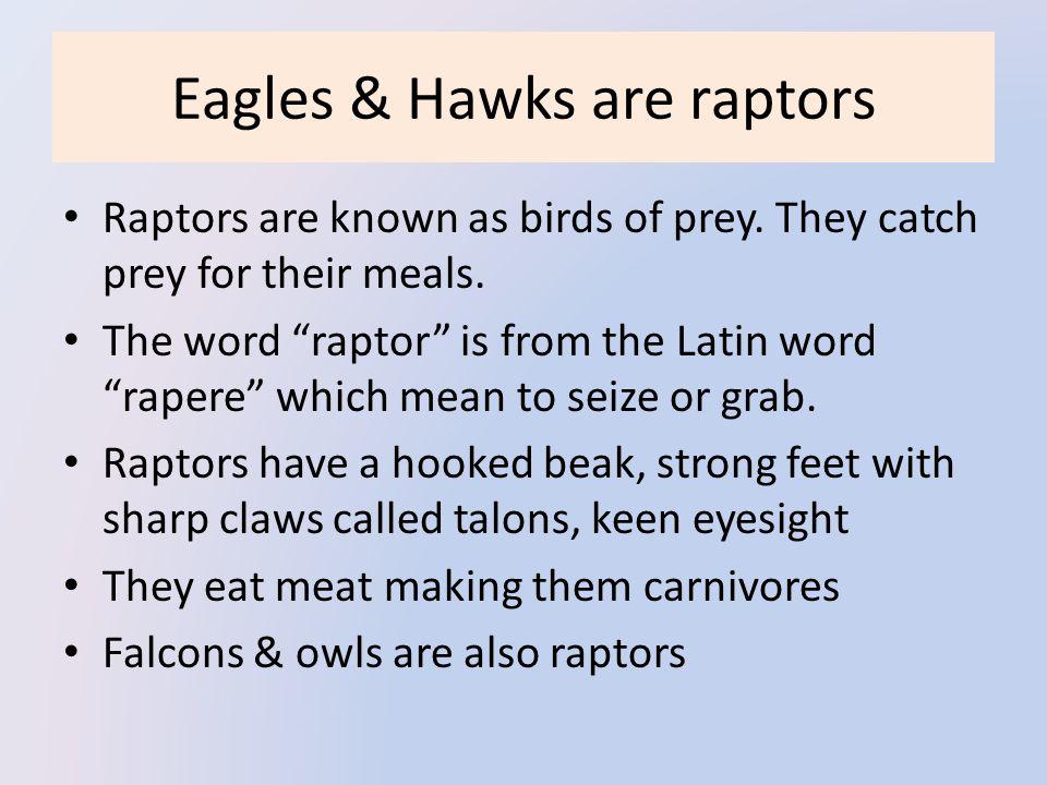 Eagles & Hawks are raptors Raptors are known as birds of prey.