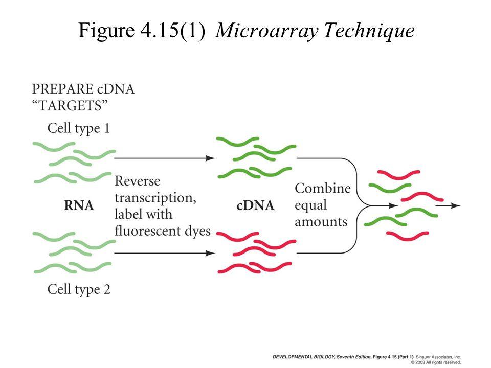 Figure 4.15(1) Microarray Technique