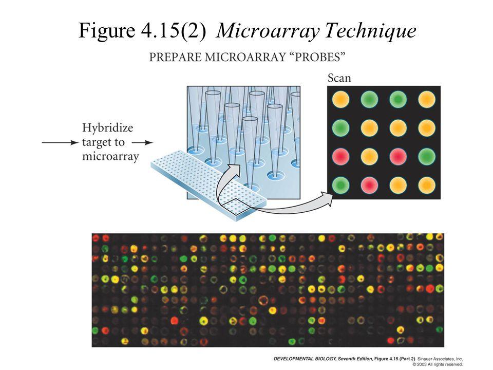 Figure 4.15(2) Microarray Technique