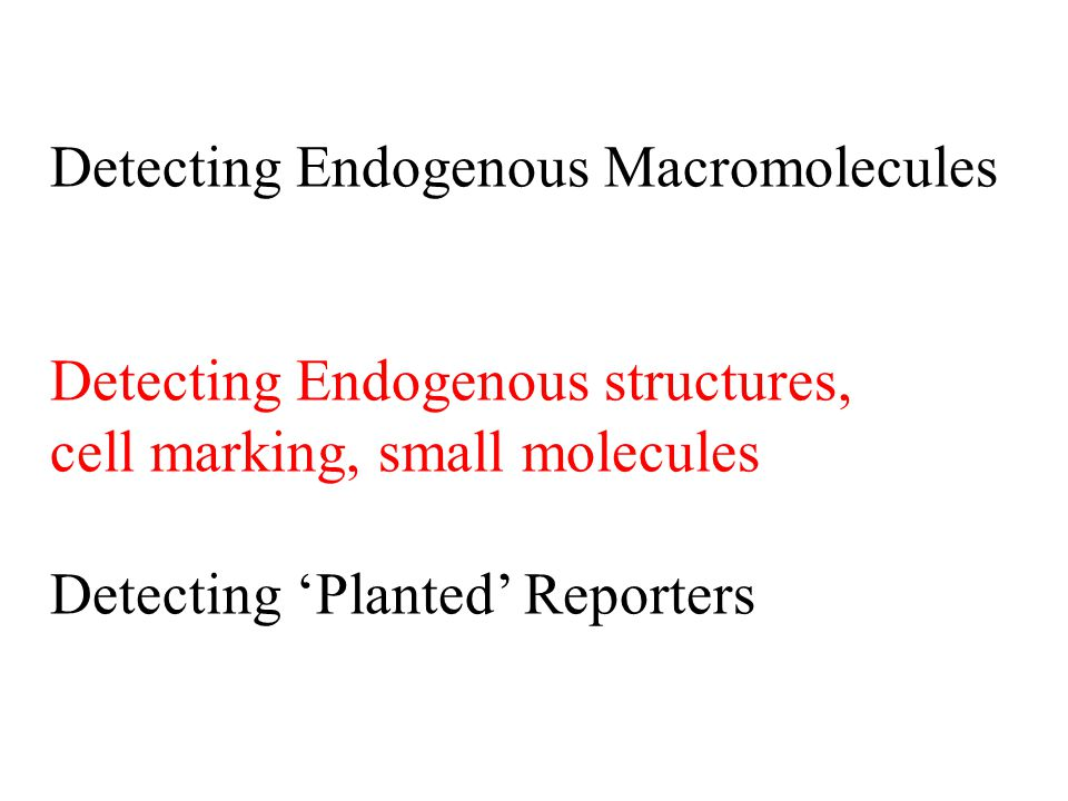 Detecting Endogenous Macromolecules Detecting Endogenous structures, cell marking, small molecules Detecting 'Planted' Reporters