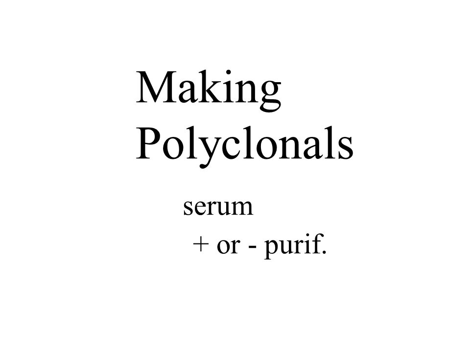 Making Polyclonals serum + or - purif.