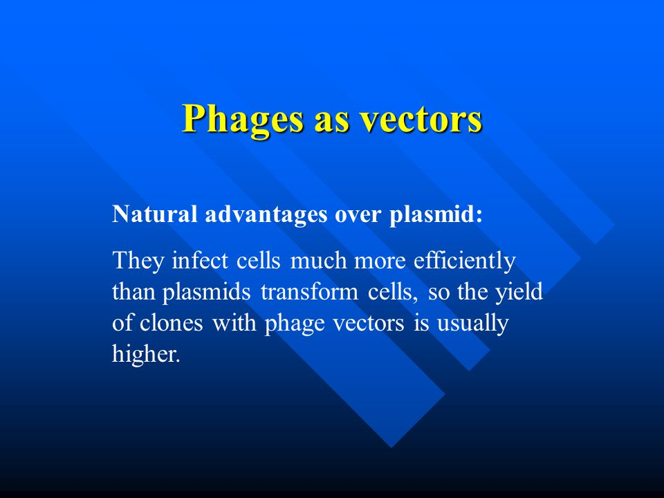 Phages as vectors Natural advantages over plasmid: They infect cells much more efficiently than plasmids transform cells, so the yield of clones with