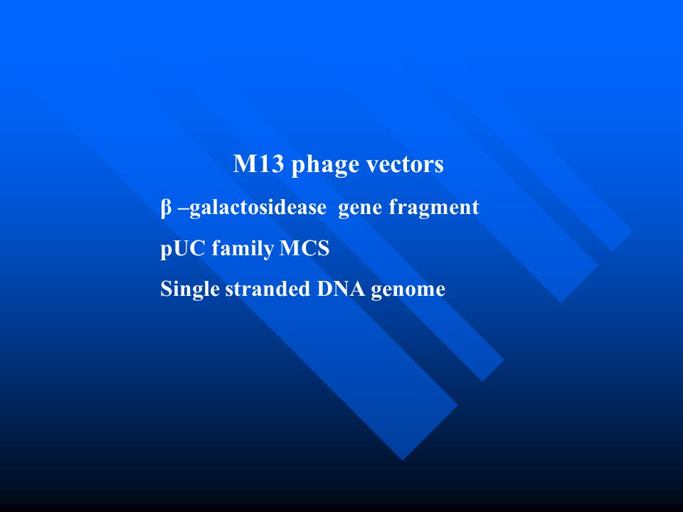 M13 phage vectors β –galactosidease gene fragment pUC family MCS Single stranded DNA genome