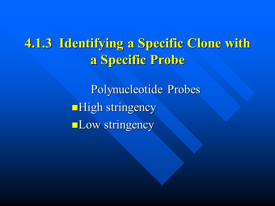 4.1.3 Identifying a Specific Clone with a Specific Probe Polynucleotide Probes High stringency High stringency Low stringency Low stringency