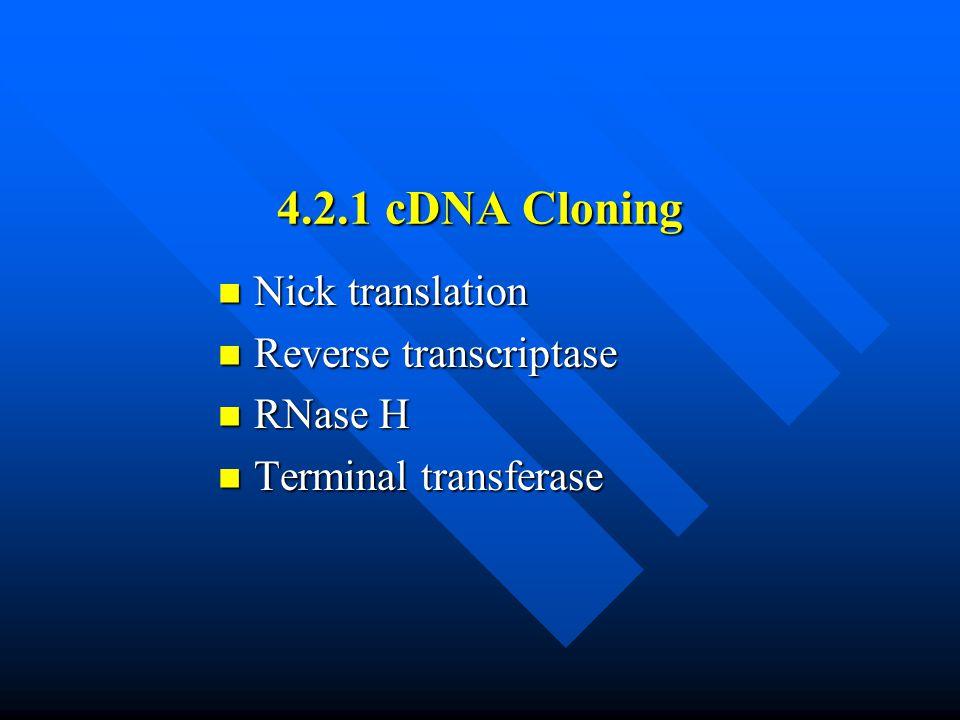4.2.1 cDNA Cloning Nick translation Nick translation Reverse transcriptase Reverse transcriptase RNase H RNase H Terminal transferase Terminal transferase