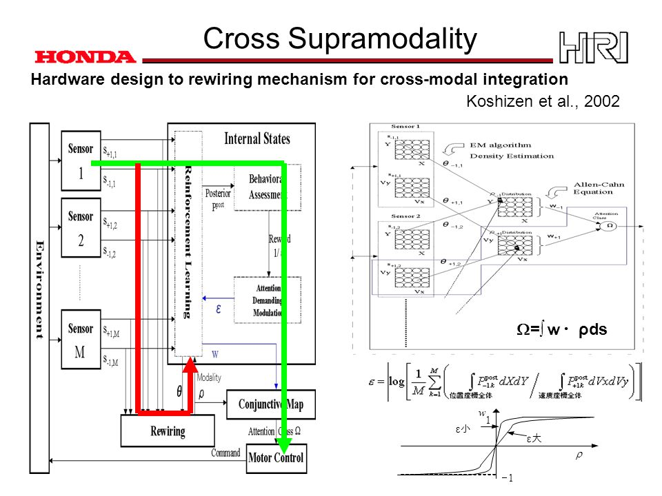 Cross Supramodality  w 1 1  ε大ε大 ε小ε小 Hardware design to rewiring mechanism for cross-modal integration  =∫ w・ ρds Koshizen et al., 2002