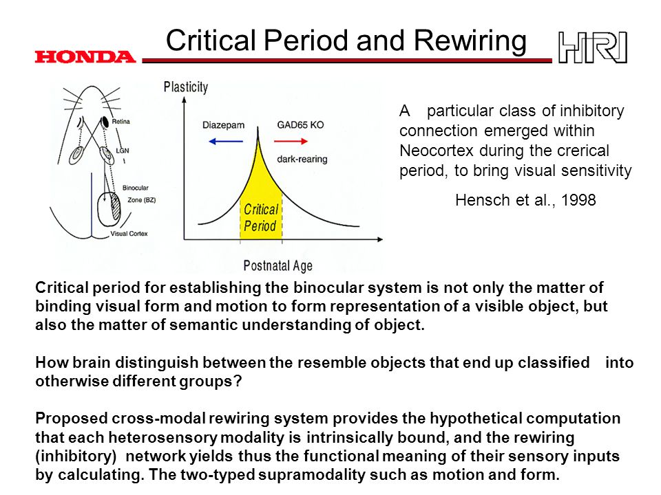 Critical Period and Rewiring Critical period for establishing the binocular system is not only the matter of binding visual form and motion to form representation of a visible object, but also the matter of semantic understanding of object.