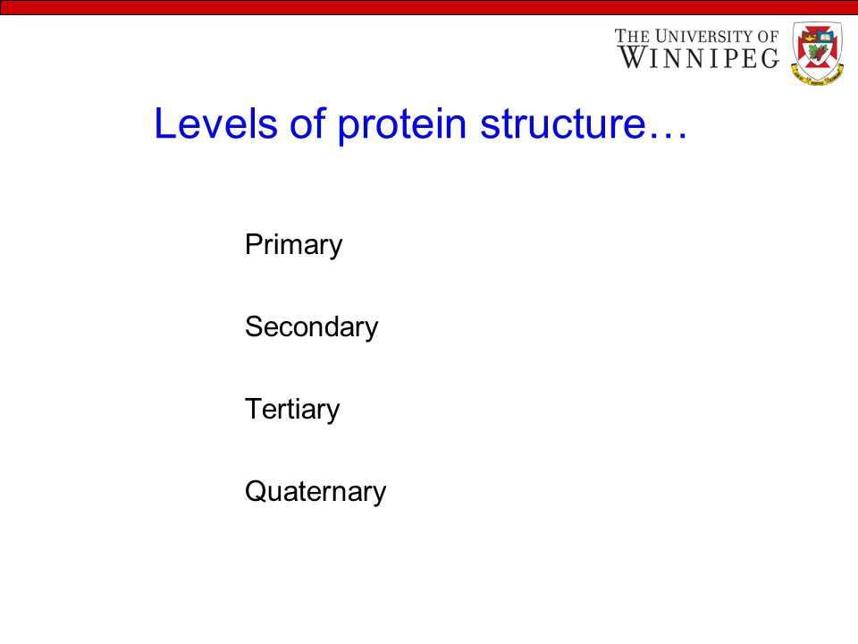 Levels of protein structure… Primary Secondary Tertiary Quaternary