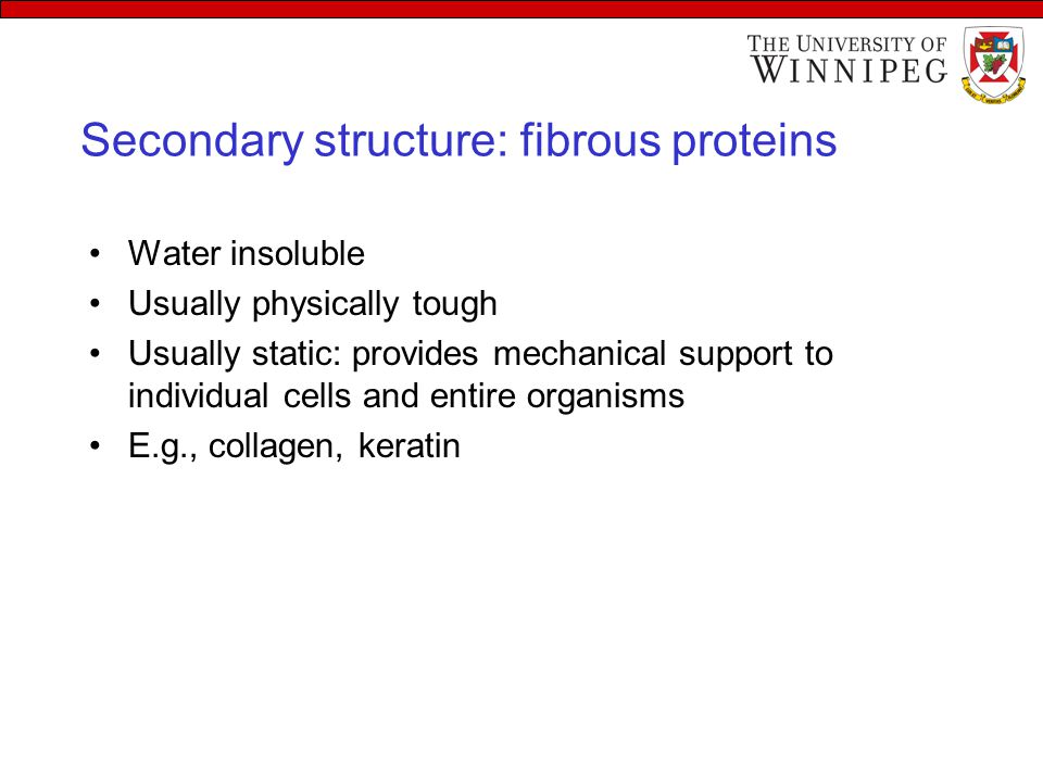 Secondary structure: fibrous proteins Water insoluble Usually physically tough Usually static: provides mechanical support to individual cells and ent