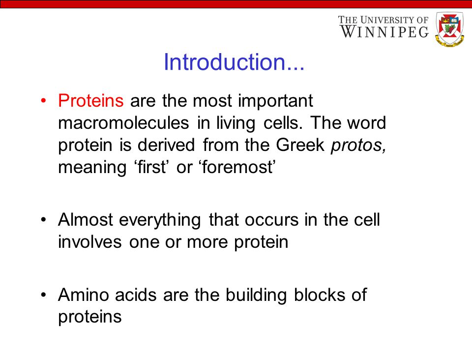 Introduction... Proteins are the most important macromolecules in living cells. The word protein is derived from the Greek protos, meaning 'first' or