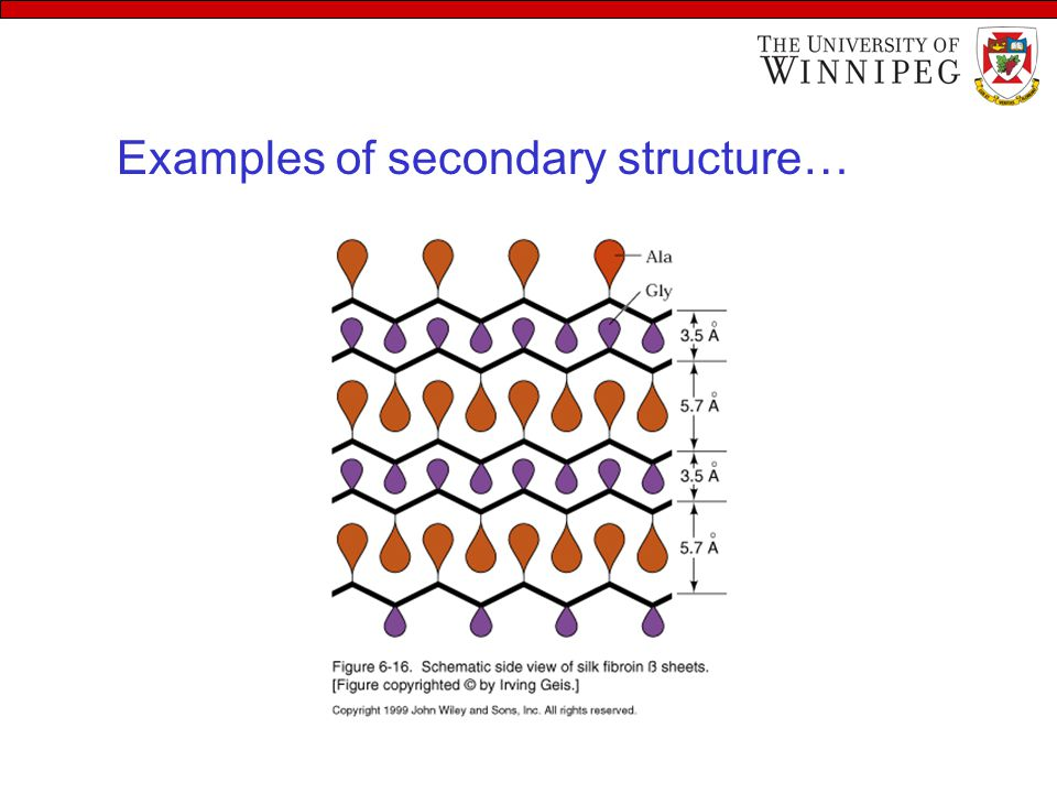 Examples of secondary structure…