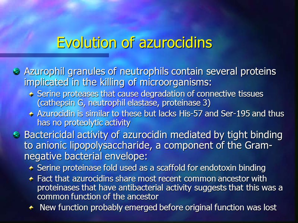 Evolution of azurocidins Azurophil granules of neutrophils contain several proteins implicated in the killing of microorganisms: Serine proteases that cause degradation of connective tissues (cathepsin G, neutrophil elastase, proteinase 3) Azurocidin is similar to these but lacks His-57 and Ser-195 and thus has no proteolytic activity Bactericidal activity of azurocidin mediated by tight binding to anionic lipopolysaccharide, a component of the Gram- negative bacterial envelope: Serine proteinase fold used as a scaffold for endotoxin binding Fact that azurocidins share most recent common ancestor with proteinases that have antibacterial activity suggests that this was a common function of the ancestor New function probably emerged before original function was lost New function probably emerged before original function was lost