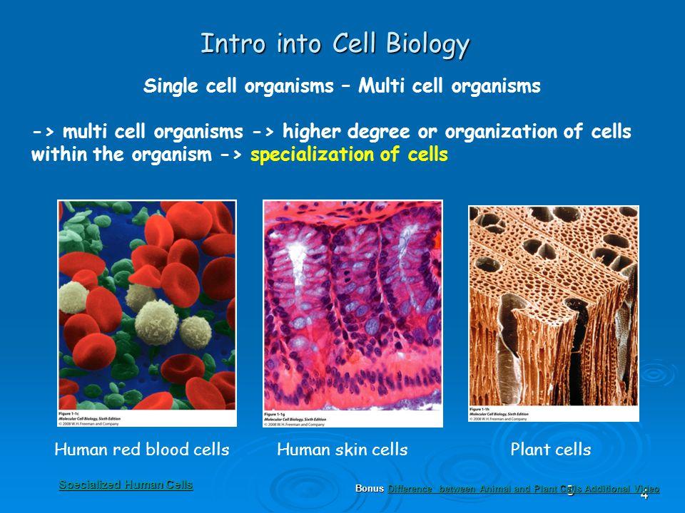 68 Intro into Cell Biology Two cell types - The Three Domain System ProkaryotesEukaryotes