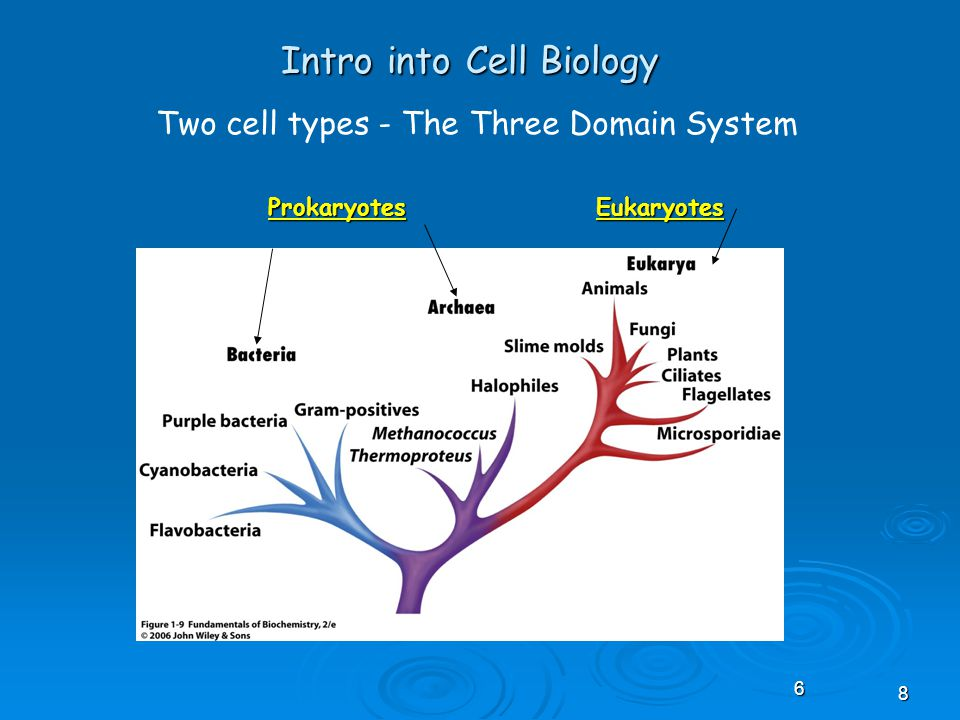 68 Intro into Cell Biology Two cell types - The Three Domain System ProkaryotesEukaryotes