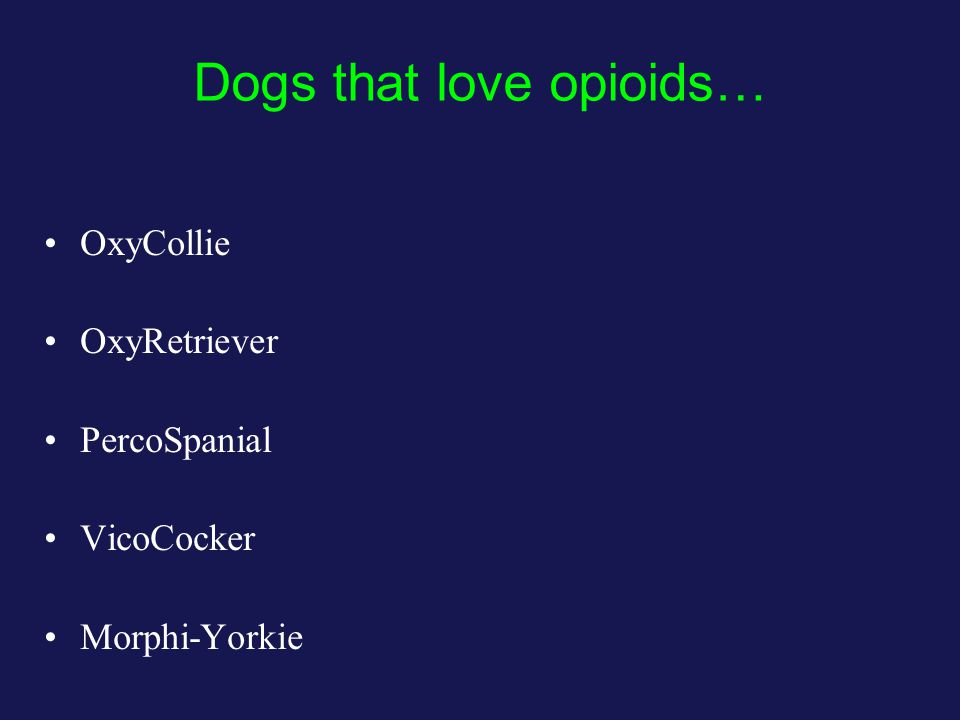 Dogs that love opioids… OxyCollie OxyRetriever PercoSpanial VicoCocker Morphi-Yorkie