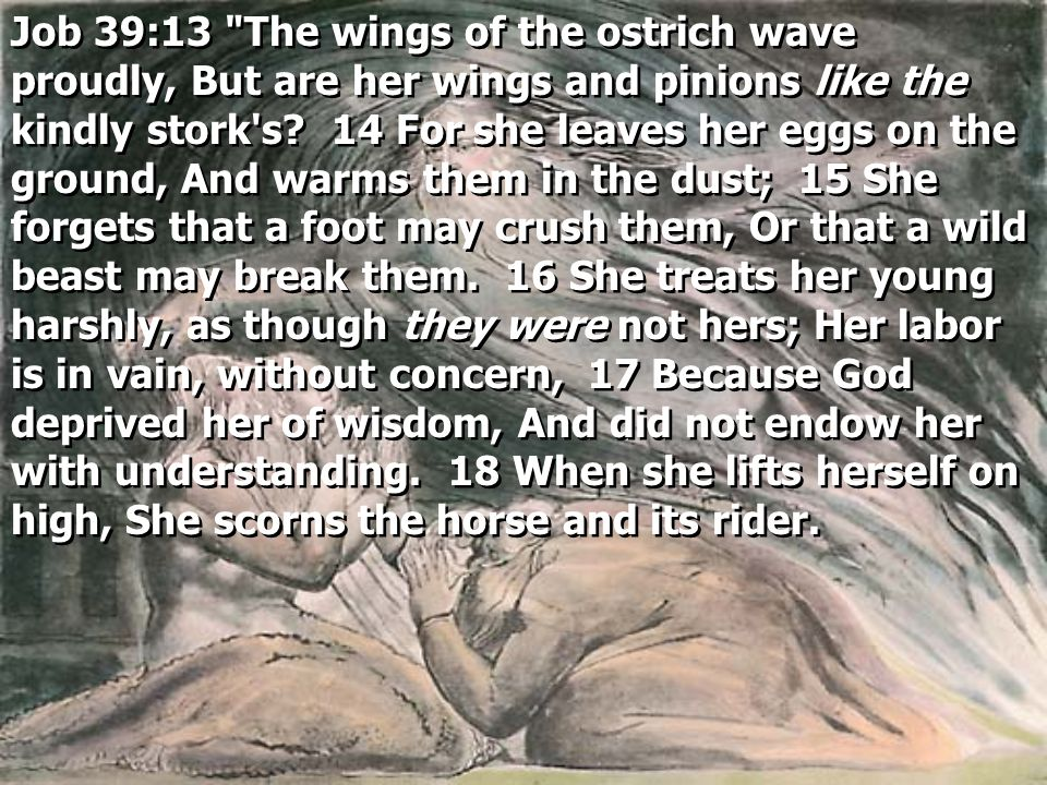Job 39:13 The wings of the ostrich wave proudly, But are her wings and pinions like the kindly stork s.