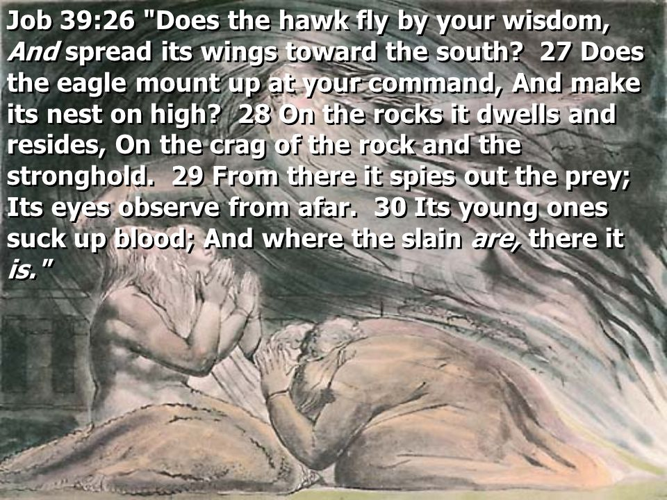 Job 39:26 Does the hawk fly by your wisdom, And spread its wings toward the south.