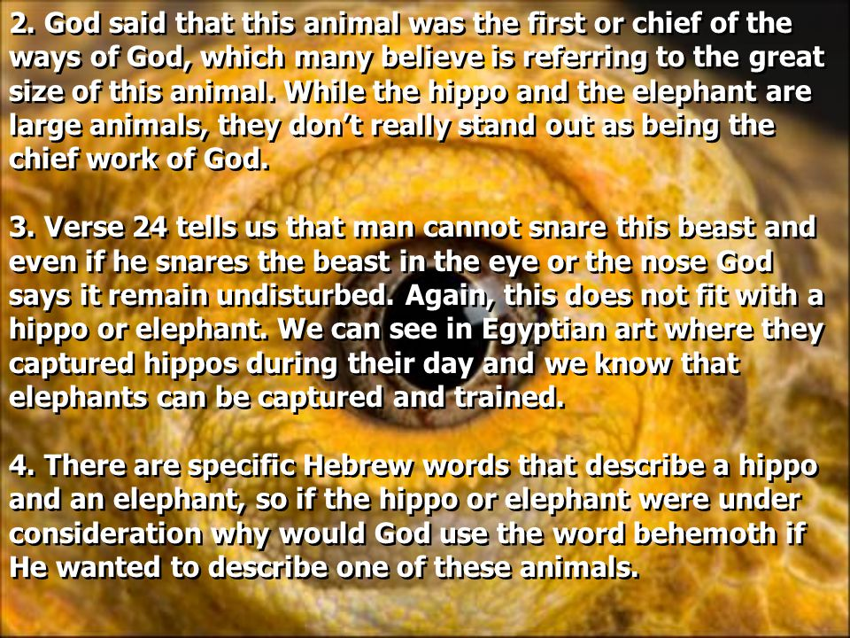 2. God said that this animal was the first or chief of the ways of God, which many believe is referring to the great size of this animal. While the hi