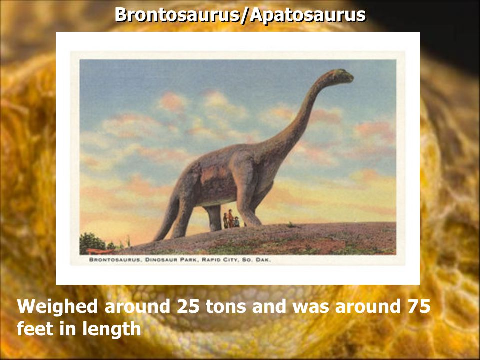 Brontosaurus/Apatosaurus Weighed around 25 tons and was around 75 feet in length