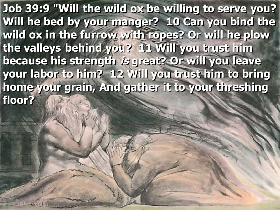 Job 39:9 Will the wild ox be willing to serve you.