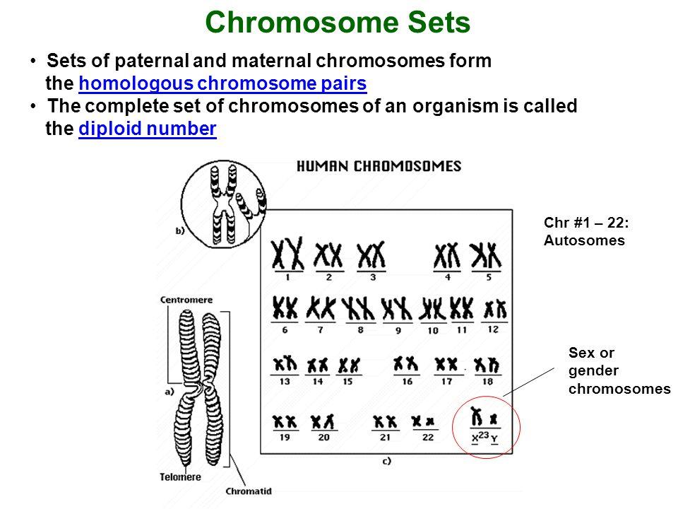 1 234567 89101112131415 16 17181920 XX 2122 Normal karyogram of a human female Chr.