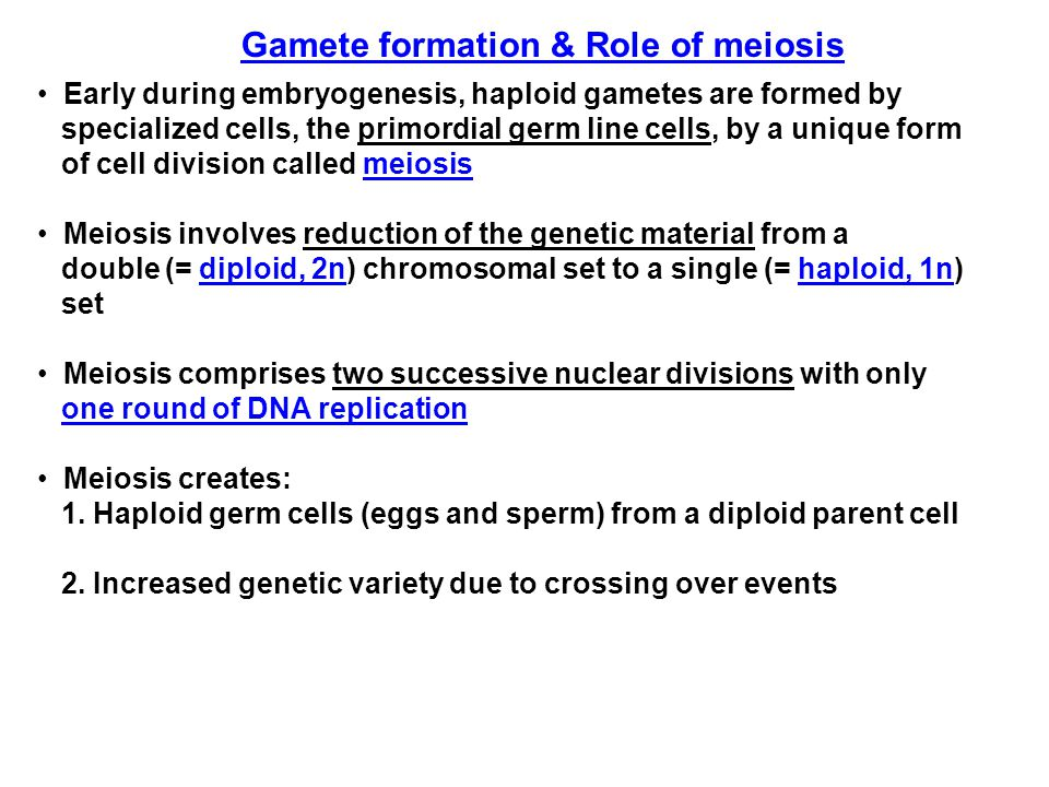 The two cell division phases of meiosis FSH stimulates One Primordial Germ cell (2n)  In gonads 4 Gametes (1n)