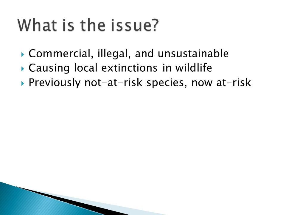  Commercial, illegal, and unsustainable  Causing local extinctions in wildlife  Previously not-at-risk species, now at-risk