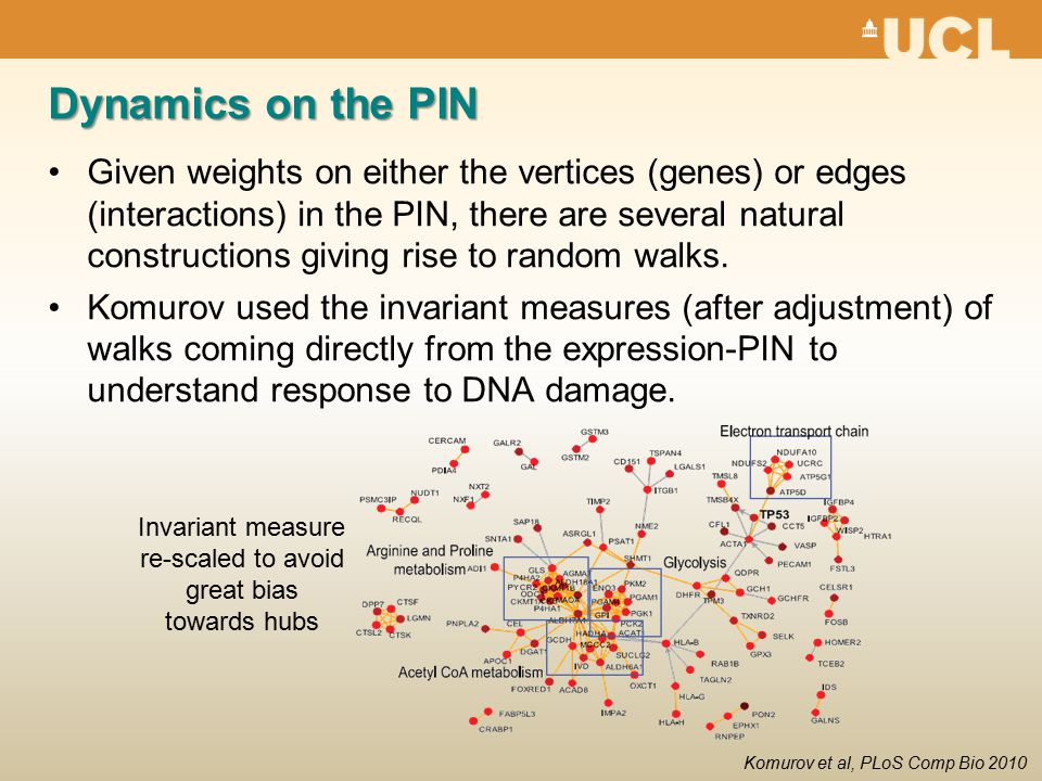 Dynamics on the PIN Given weights on either the vertices (genes) or edges (interactions) in the PIN, there are several natural constructions giving rise to random walks.