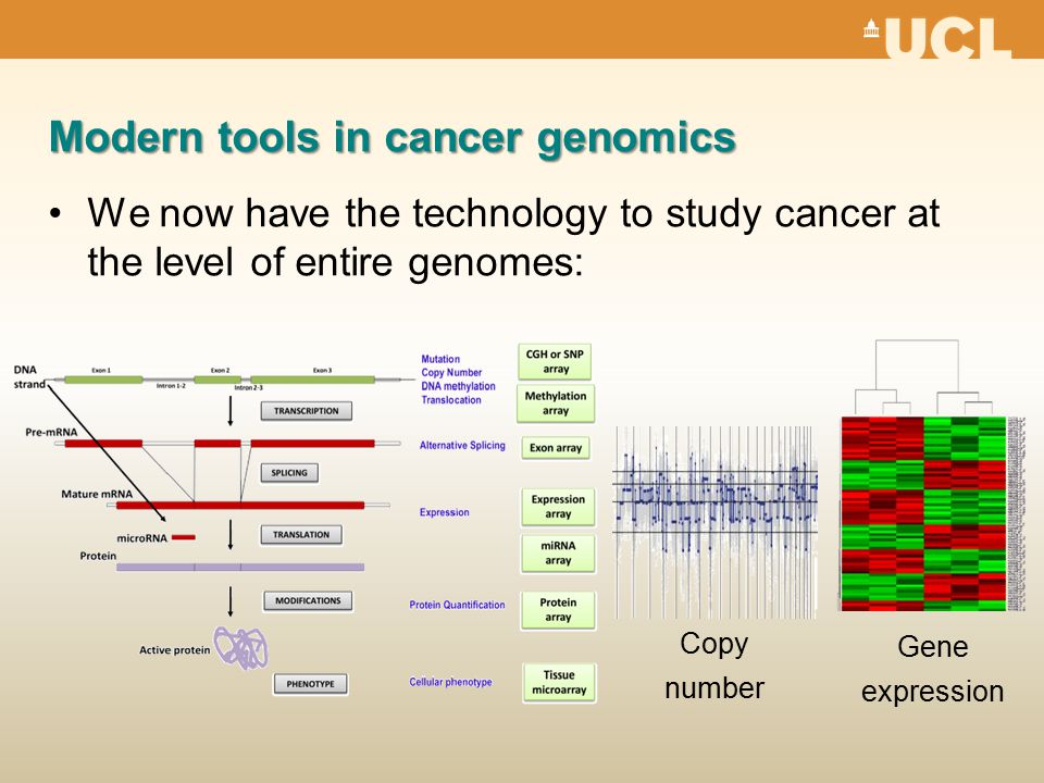 Modern tools in cancer genomics We now have the technology to study cancer at the level of entire genomes: Gene expression Copy number
