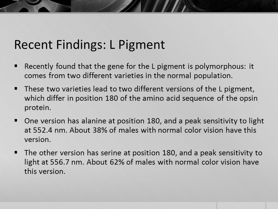 Recent Findings: L Pigment  Recently found that the gene for the L pigment is polymorphous: it comes from two different varieties in the normal population.