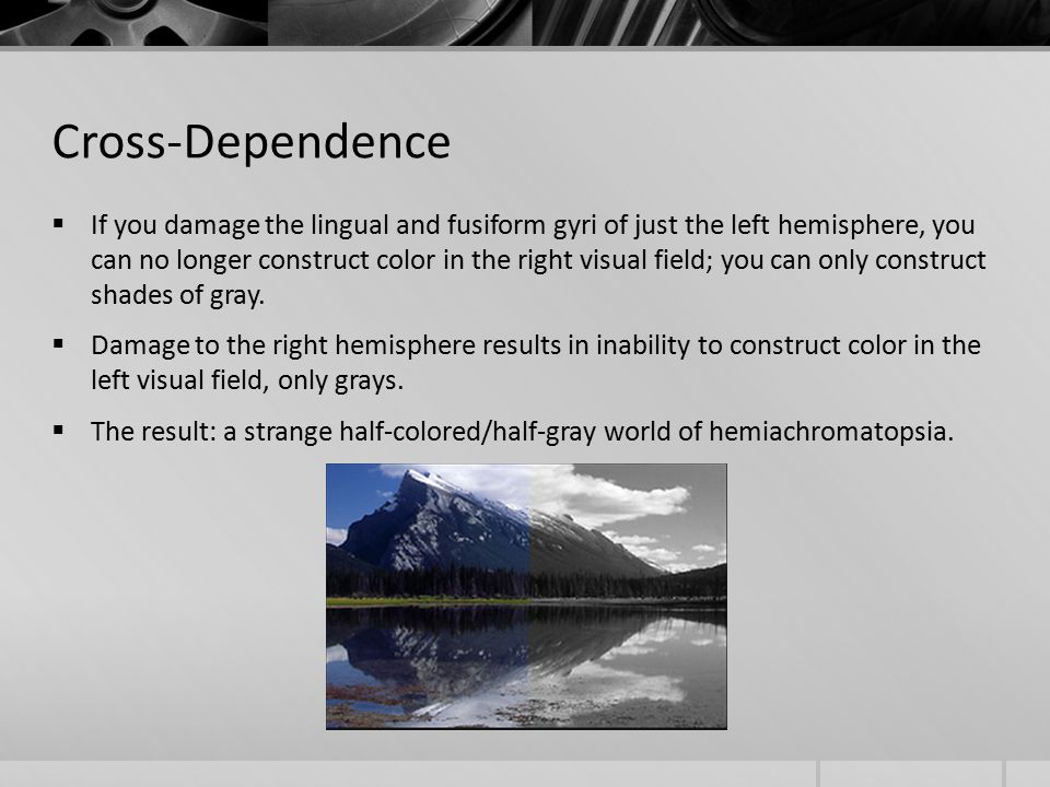 Cross-Dependence  If you damage the lingual and fusiform gyri of just the left hemisphere, you can no longer construct color in the right visual field; you can only construct shades of gray.