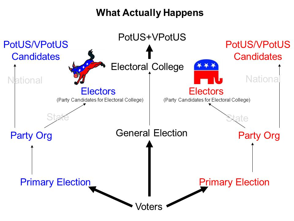 What Actually Happens Voters Primary Election General Election Party Org Electors (Party Candidates for Electoral College) Primary Election Party Org