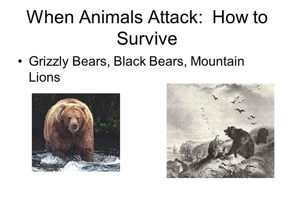 When Animals Attack: How to Survive Grizzly Bears, Black Bears, Mountain Lions