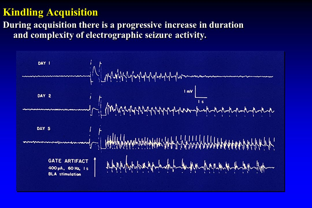 Kindling Acquisition During acquisition there is a progressive increase in duration and complexity of electrographic seizure activity.