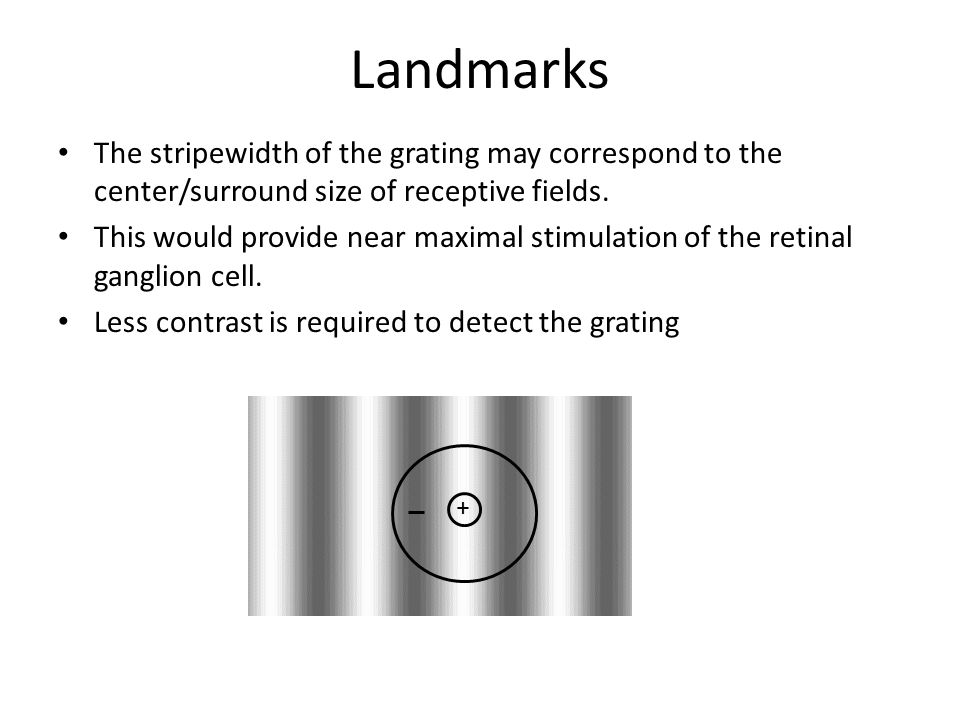 Landmarks The stripewidth of the grating may correspond to the center/surround size of receptive fields.