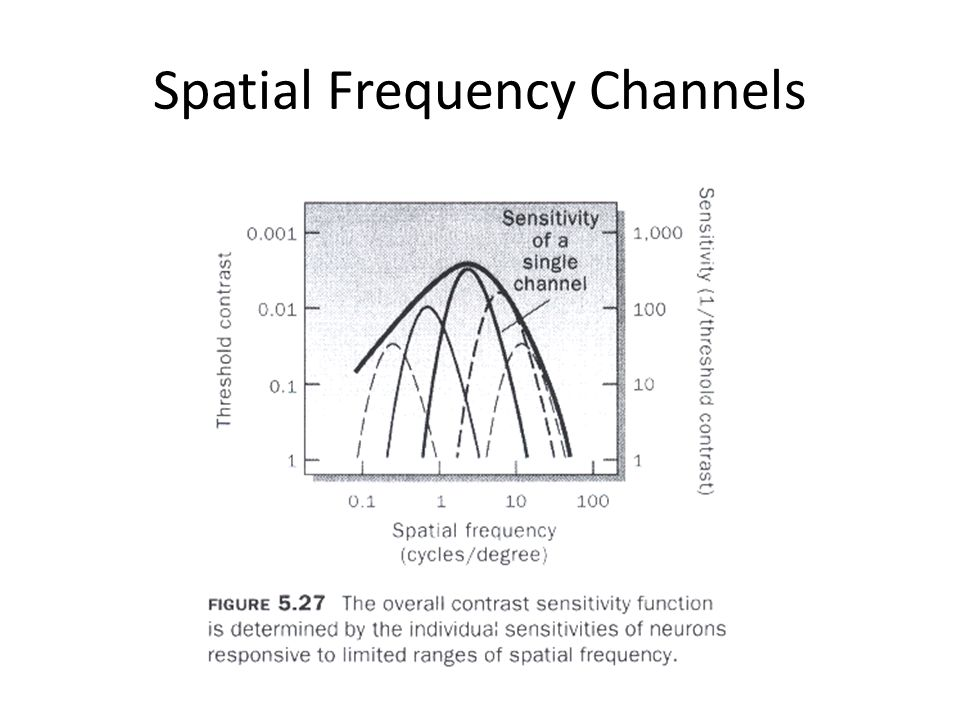 Spatial Frequency Channels