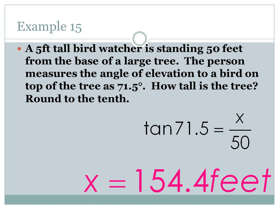 Example 15 A 5ft tall bird watcher is standing 50 feet from the base of a large tree.