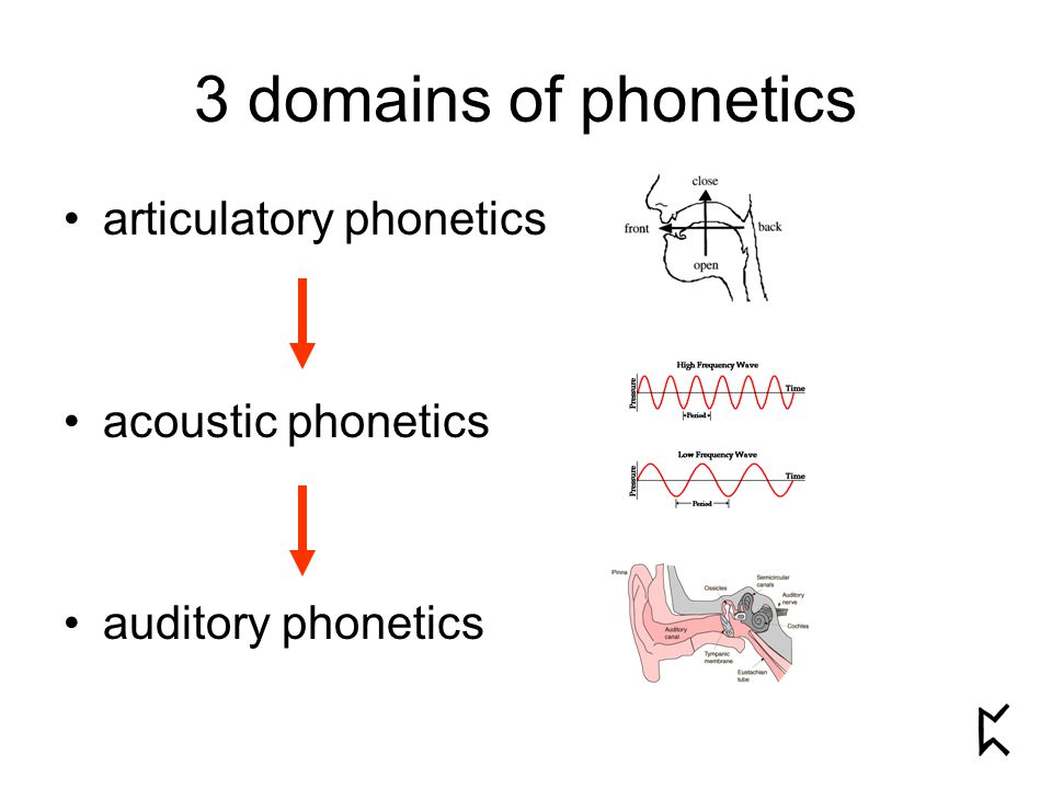 3 domains of phonetics articulatory phonetics acoustic phonetics auditory phonetics