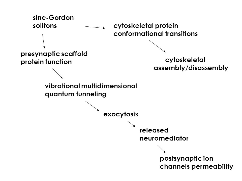 sine-Gordon solitons cytoskeletal protein conformational transitions presynaptic scaffold protein function exocytosis vibrational multidimensional quantum tunneling released neuromediator postsynaptic ion channels permeability cytoskeletal assembly/disassembly