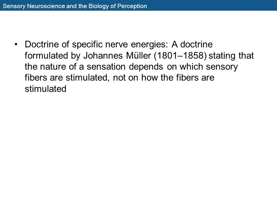 Sensory Neuroscience and the Biology of Perception Doctrine of specific nerve energies: A doctrine formulated by Johannes Müller (1801–1858) stating t