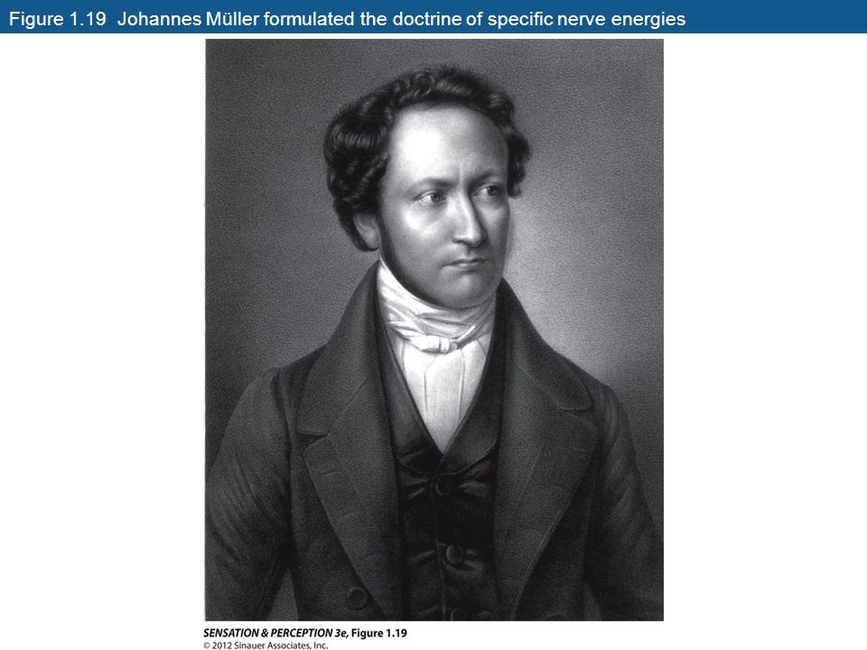 Figure 1.19 Johannes Müller formulated the doctrine of specific nerve energies