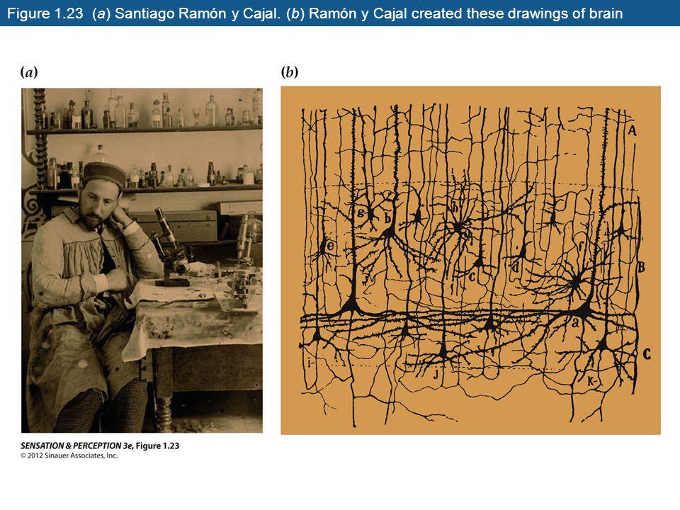 Figure 1.23 (a) Santiago Ramón y Cajal. (b) Ramón y Cajal created these drawings of brain neurons