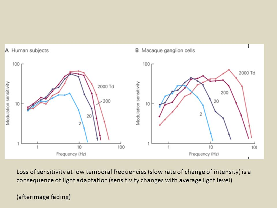 Loss of sensitivity at low temporal frequencies (slow rate of change of intensity) is a consequence of light adaptation (sensitivity changes with average light level) (afterimage fading)